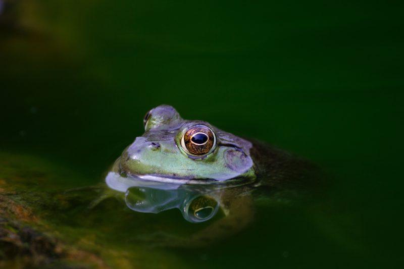 Frog Sustainability matthew kosloski unsplash