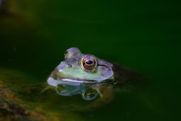 Frog Sustainability matthew kosloski unsplash