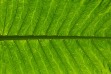 Green leaf road wengang zhai unsplash